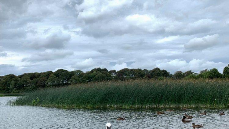 Kayaking en Ballyallia